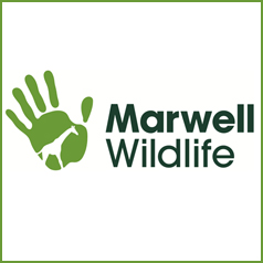 Win a family day ticket to Marwell Wildlife!